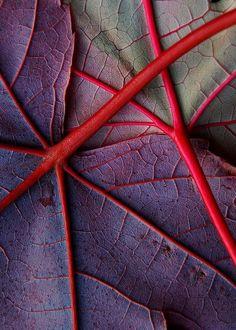 Patterns In Nature Art Color Palettes 35 Ideas Patterns In Nature, Textures Patterns, Color Patterns, Nature Pattern, Leaf Patterns, Art Et Nature, Abstract Nature, Abstract Trees, Abstract Photos