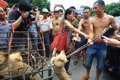Yulin, le festival de la barbarie
