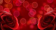 Dwie, Czerwone, Róże, Bokeh