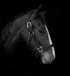Beautiful horse photography {Part 5}