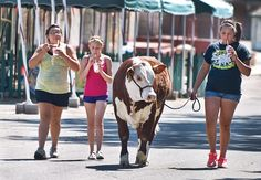 Maryssa Romero, 15, (left to right) Marysue Gonzales, 12, and Savannah Gonzales, 16, enjoy a cold treat Friday morning while walking Rocky, a Hereford steer, down a street on the Colorado State Fairgrounds. The girls were attending the Pueblo County Fair. (Chieftain photo by John Jaques, July 13, 2012)