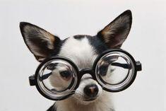 Rigolo, le chien a lunettes!