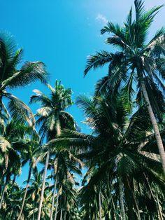 Palms everywhere.