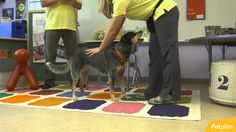 Learning the ABCs: How to Master the Basic Dog Training Commands