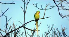 Papagei im März - Jahreszeiten - Galerie - Community