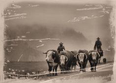 Movin' the herd bulls  Photographer?