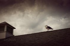 Seagull Storm Clouds Modern Wall Art by MScottPhotography on Etsy