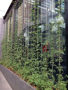 Image result for climbing plant wall architecture