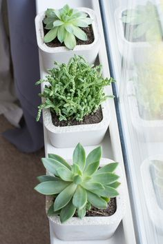 Learn how to make these cute little concrete planters using this lightweight…