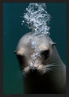 Making Bubbles ~ Seal