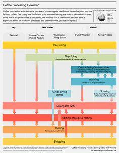 Belgium Coffee Bars | Coffee Processing Flowchart
