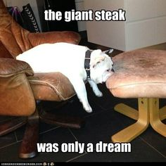 bulldogs with captions | Recaption See All Captions