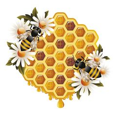 Elements of Honey and Bees vector set 01 - Vector Animal free download