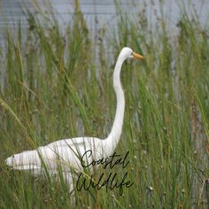 Come see all of the coastal wildlife along the our area.