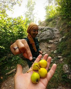 Hiking with us is not only for the exercise. We do it for the tastes as well.  Pears on the trail are almost ripe. So join us and eat some wild and organic fruits!  The hiking season is far from over. The most beautiful time is ahead of us: the fall!  Hiking to Lukomir highland village this weekend has shown us the first signs of colourful fall. It will be very exciting watching the colour changes in the next month.  Pick your own pears and eat them right at the trail for only 45… Highland Village, Organic Fruit, Very Excited, Bosnia, Pears, Color Change, Most Beautiful, Trail, Hiking
