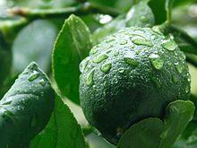 Meyer citrón - Wikipedia