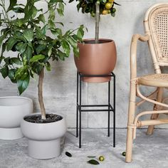 Buy your Maximus flower pot 21 cm from Broste Copenhagen at Nordic Nest. Botanical Decor, Broste Copenhagen, Flower Pots, Flowers, Tans, Scandinavian Design, Bar Stools, Greenery, Planter Pots