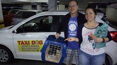 TAXI DOG MONTANHA TRANSPORTE DE ANIMAIS NO RIO DE JANEIRO: IRAJÁ para FLAMENGO