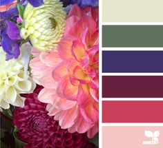 A floral palette of colours. Scheme Color, Colour Pallette, Color Palate, Colour Schemes, Color Combos, Design Seeds, World Of Color, Color Of Life, Color Palette Challenge