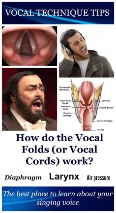 The vocal cords (or vocal folds) are located in your larynx (voice box). When you 'vocalise', air from the lungs passes the vocal cords and they will start vibrating. This vibration produces sound. The vocal cords can be stretched to make higher tones. They can also become thicker and thinner.#singing#voice#video#larynx#voicebox#vocal#technique#tips#cords#folds