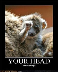 I'm squashing your head......