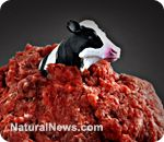 Lets clarify that most ground beef sold in the US comes from dairy cows. Hamburger=dairy cow, ALL milk products come from dairy cows of course. I think that is where the disconnect is between this news and people understanding this is VERY SERIOUS. -- Mad cow disease detected in U.S. dairy cow; South Korea halts all US beef sales