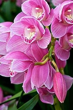 flowersgardenlove:  Orchid By Andy Beautiful gorgeous pretty flowers