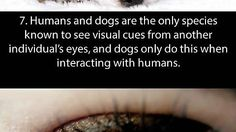Some facts about your eyes - Imgur