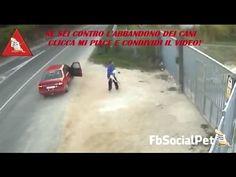 VIGLIACCO! Abbandona il cane senza alcun problema... FbSocialPet » Canale Video » FbSocialPet: social network per cani, gatti, cavalli, tutti gli animali
