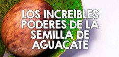 Los increíbles poderes de la semilla de aguacate  http://nutricionysaludyg.com/salud/semilla-de-aguacate-beneficios-salud/