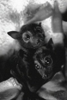 bats - who knew they were so cute?!