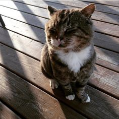 Over a year ago, a cat who had lived most of life as a stray, found love when a kind-hearted woman opened her heart to him when he needed help the most.Meet Larry! @larry_the_security_cat Larry was a neighborhood stray when Theresa from Delaware found him hopping ar...