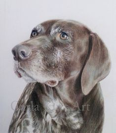 Custom Dog Pet Portrait pet memorial dog by CarlaKurtArt on Etsy