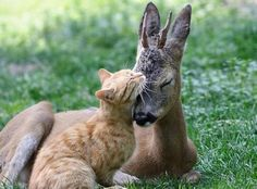 Photographer Vitaly Ktach captured this tender moment between a cat and a fawn at the Odessa Zoo in Odessa, Ukraine.