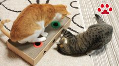 [Cats Video] Cats play with cat toy【Cats room Miaou】