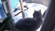 Зимнее спасение кота Федора!