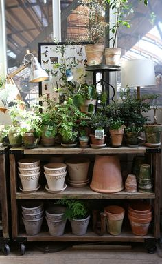 Attractive display of garden pots and plants for my garden shed. Garden Shop, Garden Pots, Home And Garden, Potted Garden, Garden Benches, Indoor Garden, Indoor Plants, Outdoor Gardens, Greenhouse Gardening