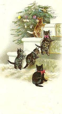 Kitties at Christmas