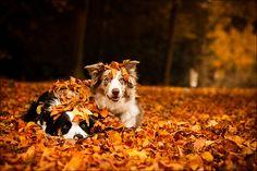 Crunchy Leaves & Apple Trees
