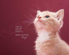 Bible Verse Desktop Wallpaper | Download HD Christian Bible Verse Greetings Card & Wallpapers Free