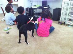 Even the dog! Dogs, Animals, Animales, Animaux, Pet Dogs, Doggies, Animal, Animais