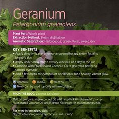 Who here uses the Geranium oil? This is another one of my favorites! It has outstanding benefits for soothing skin and is actually a common ingredient in many skin care products. I also find it useful for minor aches and pains. You can even add it to your shampoo to get a little extra glow! Does anyone have any other uses for this essential oil? www.hayleyhobson.com