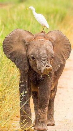 baby elephant by colin davis