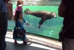 Sea lions reaction to girl falling- animals have more soul than most humans!