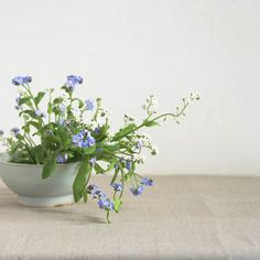 ♡ forget-me-nots are pretty little flowers and the photo composition is great