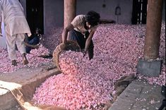 Rose Market in Rajasthan, India  via Mary Nell Jackson