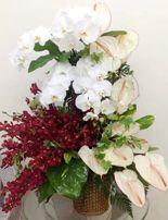 Gio lan ho diep, hoa sinh nhat Dienhoa360 cung cấp dịch vụ điện hoa toàn quốc, giao hoa miễn phí nội thành. www.dienhoa360.com Liên hệ đặt hàng Hotline: 0988 903 205 - 0984 08 1332