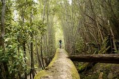 Must-Ride: Mt Wellington North-South Track, Tasmania - Flow Mountain Bike Mtb Trails, Mountain Bike Trails, Tasmania, Bike Parking, Cycling Bikes, Road Bikes, Kayaking, Cool Pictures, National Parks