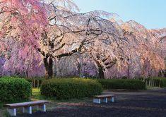 東北・夢の桜街道 復興への祈りを捧げる 桜の札所・八十八ヵ所巡りmiyagi