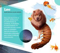 Horóscopo de Leo, según el Tarot de las sirenas.  #RevistaSBPE #PerroExtraordinario #Entretenimiento #HoróscopoCanino